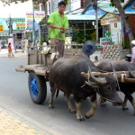 Ochsengefährt auf Hauptstrasse in Mui Ne, Vietnam