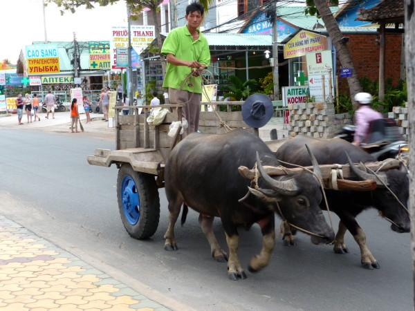 Ochsenkarren auf Hauptstrasse von Mui Ne